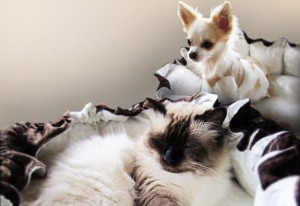 Most Awesome DIY Pet Bed Ever (It's Fluffy!)