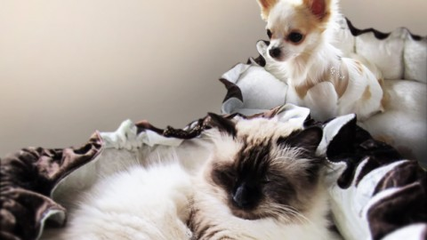 Most Awesome DIY Pet Bed Ever (It's Fluffy!)   DIY Joy Projects and Crafts Ideas