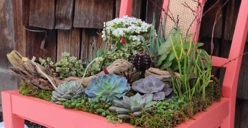 Diy succulent planter Planters for succulents