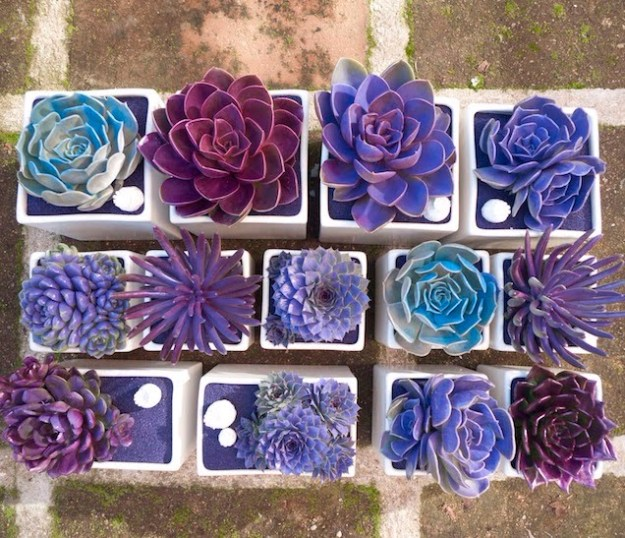 Succulents Crafts and DIY Projects - DIY Galaxy Succulents - How To Make Fun, Beautiful and Cool Succulent Cactus Wedding Favors, Centerpieces, Mason Jar Ideas, Flower Pots and Decor #crafts #succulents #gardening