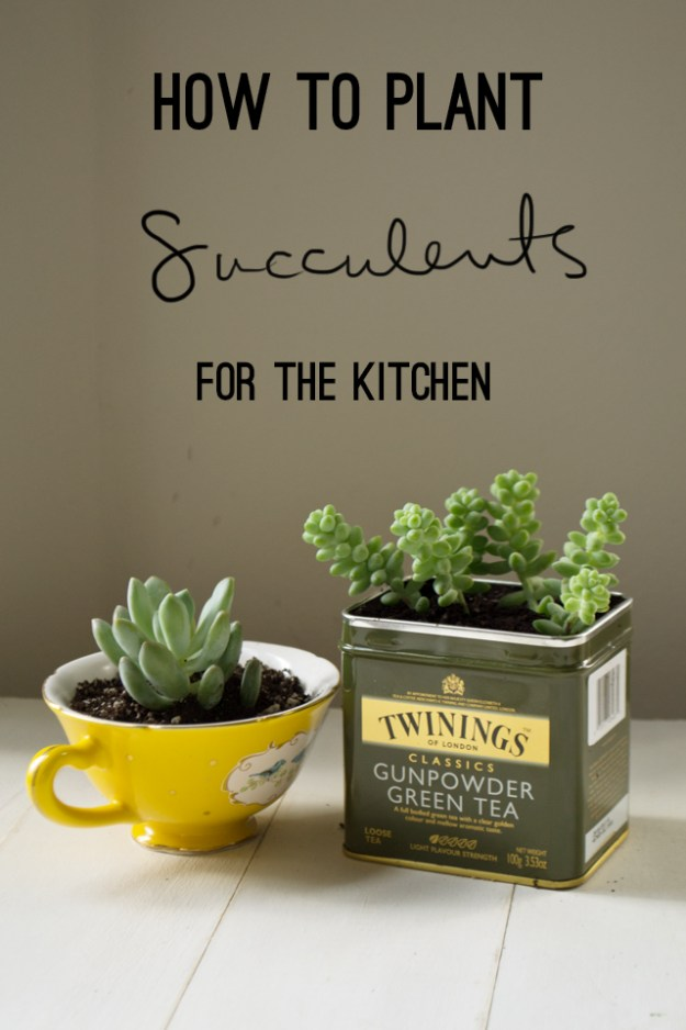 Succulents Crafts and DIY Projects - Kitchen Succulents - How To Make Fun, Beautiful and Cool Succulent Cactus Wedding Favors, Centerpieces, Mason Jar Ideas, Flower Pots and Decor #crafts #succulents #gardening