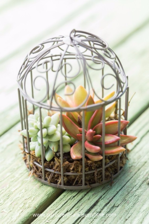 Succulents Crafts and DIY Projects - Miniature SUcculent Bird Cages - How To Make Fun, Beautiful and Cool Succulent Cactus Wedding Favors, Centerpieces, Mason Jar Ideas, Flower Pots and Decor #crafts #succulents #gardening