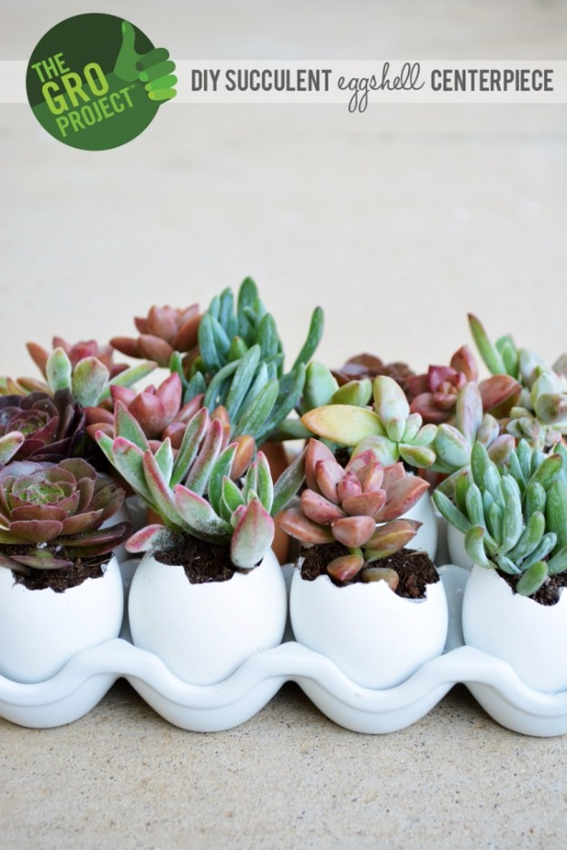 Succulents Crafts and DIY Projects - Succulent Eggshell Centerpiece - How To Make Fun, Beautiful and Cool Succulent Cactus Wedding Favors, Centerpieces, Mason Jar Ideas, Flower Pots and Decor http://diyjoy.com/diy-ideas-succulents-crafts