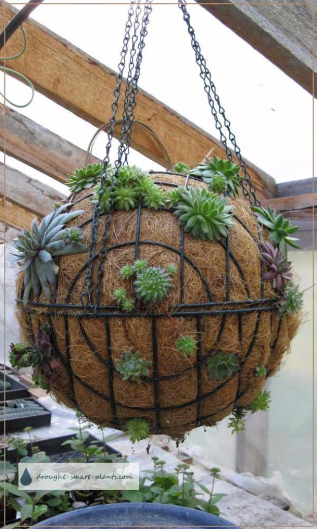 Succulents Crafts and DIY Projects - Succulent Sphere - How To Make Fun, Beautiful and Cool Succulent Cactus Wedding Favors, Centerpieces, Mason Jar Ideas, Flower Pots and Decor #crafts #succulents #gardening