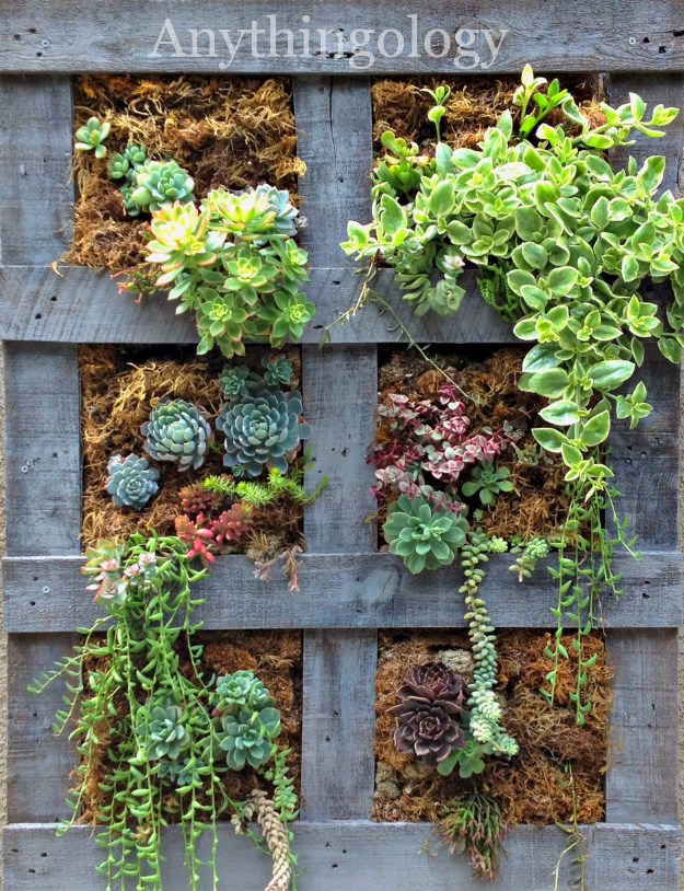 32 super creative diy succulent crafts and diys for you to try for Vertical pallet garden