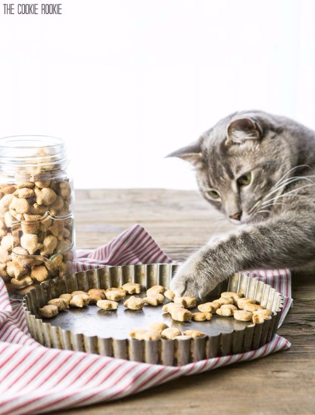 DIY Pet Recipes For Treats and Food - 3-Ingredient Salmon Cat Treats - Dogs, Cats and Puppies Will Love These Homemade Products and Healthy Recipe Ideas - Peanut Butter, Gluten Free, Grain Free - How To Make Home made Dog and Cat Food