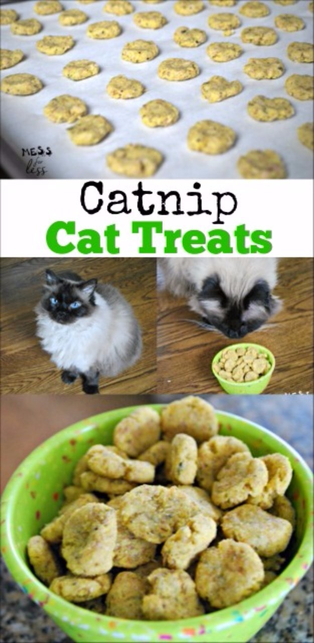 DIY Pet Recipes For Treats and Food - Catnip Cat Treats Recipe - Dogs, Cats and Puppies Will Love These Homemade Products and Healthy Recipe Ideas - Peanut Butter, Gluten Free, Grain Free - How To Make Home made Dog and Cat Food