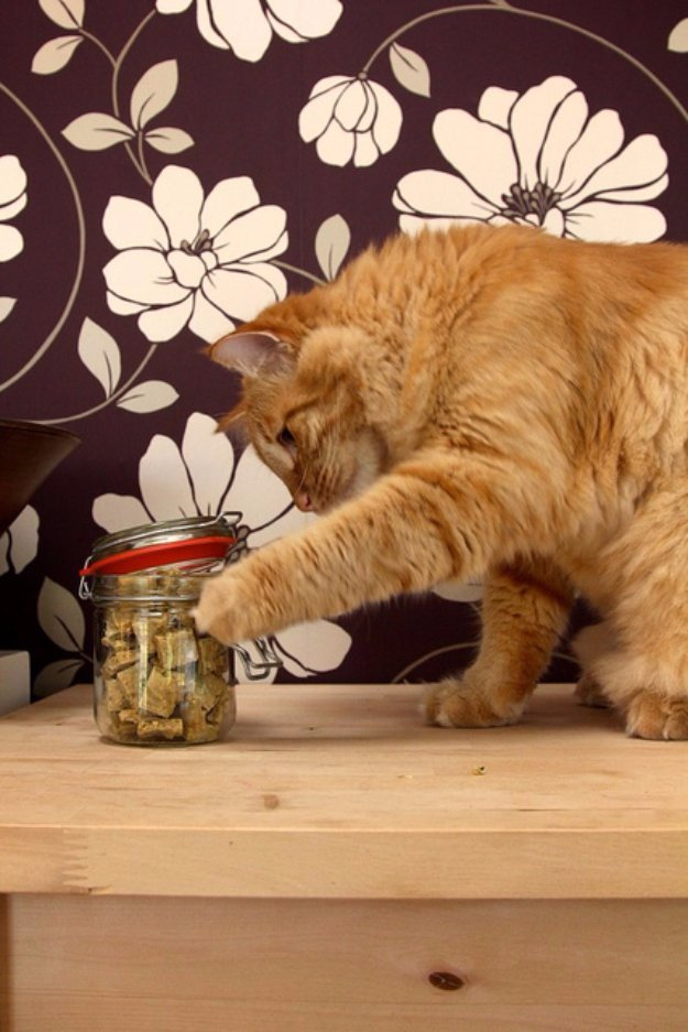 DIY Pet Recipes For Treats and Food - Chewy Cat Treats - Dogs, Cats and Puppies Will Love These Homemade Products and Healthy Recipe Ideas - Peanut Butter, Gluten Free, Grain Free - How To Make Home made Dog and Cat Food
