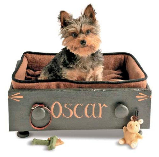 DIY Dog Beds - Customized Drawer Pet Bed - Projects and Ideas for Large, Medium and Small Dogs. Cute and Easy No Sew Crafts for Your Pets. Pallet, Crate, PVC and End Table Dog Bed Tutorials #pets #diypet #dogs #diyideas