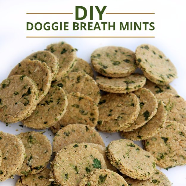 DIY Pet Recipes For Treats and Food - DIY Doggie Breath Mints - Dogs, Cats and Puppies Will Love These Homemade Products and Healthy Recipe Ideas - Peanut Butter, Gluten Free, Grain Free - How To Make Home made Dog and Cat Food