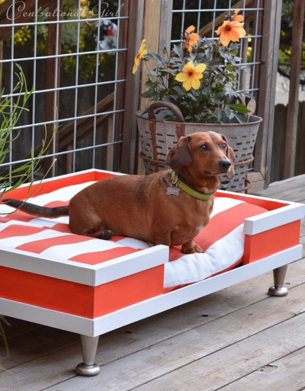 DIY Dog Beds - DIY Modern Dog Bed - Projects and Ideas for Large, Medium and Small Dogs. Cute and Easy No Sew Crafts for Your Pets. Pallet, Crate, PVC and End Table Dog Bed Tutorials #pets #diypet #dogs #diyideas