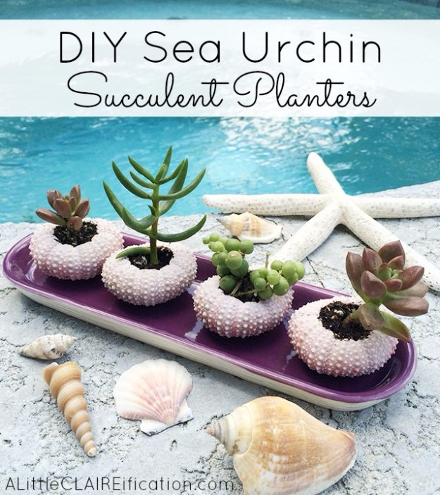 DIY Home Decor Projects for Summer - DIY Sea Urchin Succulent Planters - Creative Summery Ideas for Table, Kitchen, Wall Art and Indoor Decor for Summer