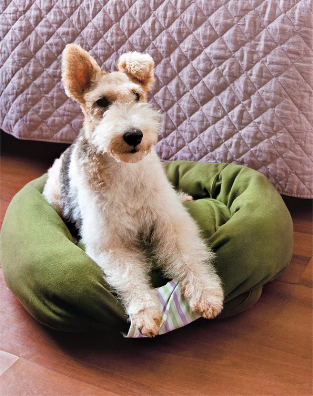 DIY Dog Beds - DIY Sweatshirt Dog Bed - Projects and Ideas for Large, Medium and Small Dogs. Cute and Easy No Sew Crafts for Your Pets. Pallet, Crate, PVC and End Table Dog Bed Tutorials #pets #diypet #dogs #diyideas