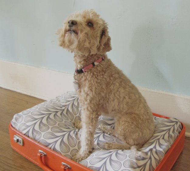 DIY Dog Beds - DIY Vintage Suitcase Dog Bed - Projects and Ideas for Large, Medium and Small Dogs. Cute and Easy No Sew Crafts for Your Pets. Pallet, Crate, PVC and End Table Dog Bed Tutorials #pets #diypet #dogs #diyideas