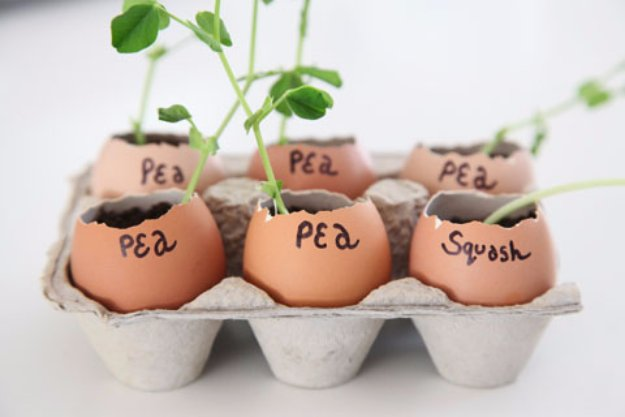 DIY Ideas for Your Garden - Eggshell Garden Seed Starters - Cool Projects for Spring and Summer Gardening - Planters, Rocks, Markers and Handmade Decor for Outdoor Gardens