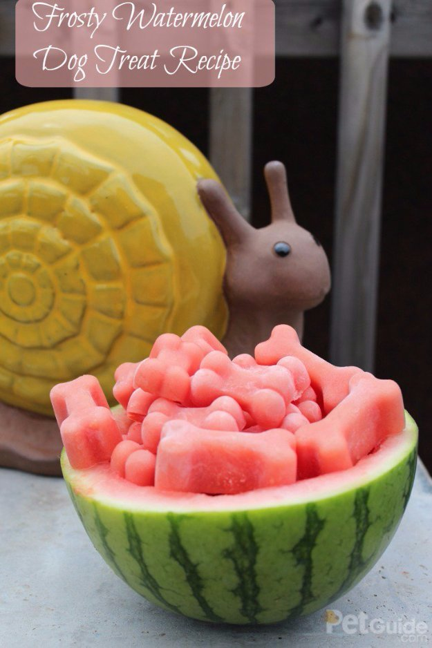 DIY Pet Recipes For Treats and Food - Frosty Watermelon Dog Treat Recipe - Dogs, Cats and Puppies Will Love These Homemade Products and Healthy Recipe Ideas - Peanut Butter, Gluten Free, Grain Free - How To Make Home made Dog and Cat Food