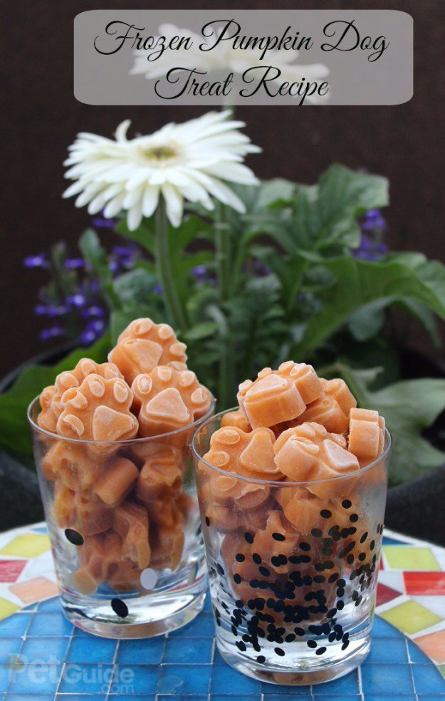 DIY Pet Recipes For Treats and Food - Frozen Pumpkin Dog Treat Recipe - Dogs, Cats and Puppies Will Love These Homemade Products and Healthy Recipe Ideas - Peanut Butter, Gluten Free, Grain Free - How To Make Home made Dog and Cat Food