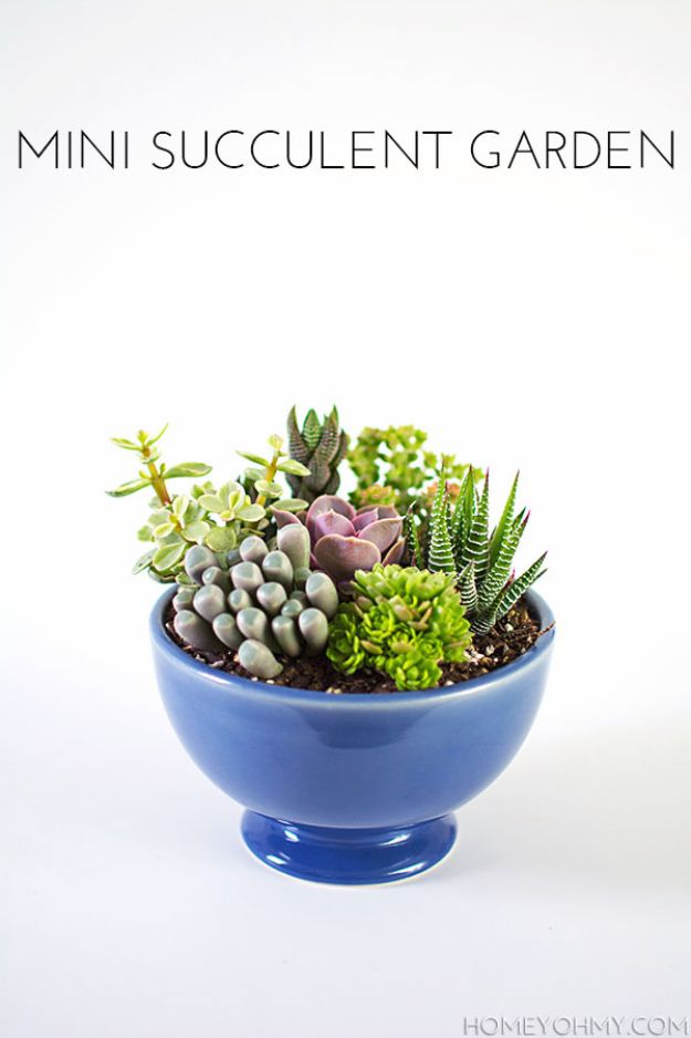 Creative DIY Mothers Day Gifts Ideas - Mini Succulent Garden - Thoughtful Homemade Gifts for Mom. Handmade Ideas from Daughter, Son, Kids, Teens or Baby - Unique, Easy, Cheap Do It Yourself Crafts To Make for Mothers Day, complete with tutorials and instructions #mothersday