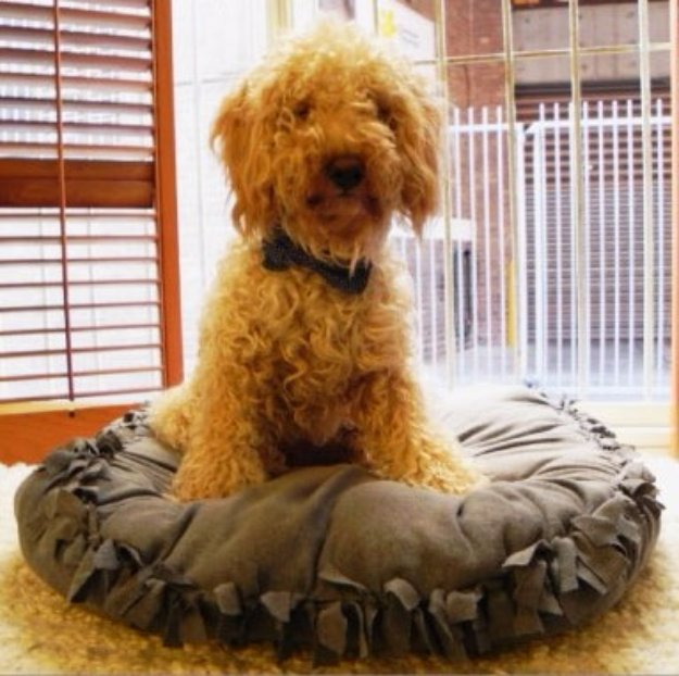 DIY Dog Beds - No Sew DIY Dog Bed Pillow - Projects and Ideas for Large, Medium and Small Dogs. Cute and Easy No Sew Crafts for Your Pets. Pallet, Crate, PVC and End Table Dog Bed Tutorials #pets #diypet #dogs #diyideas