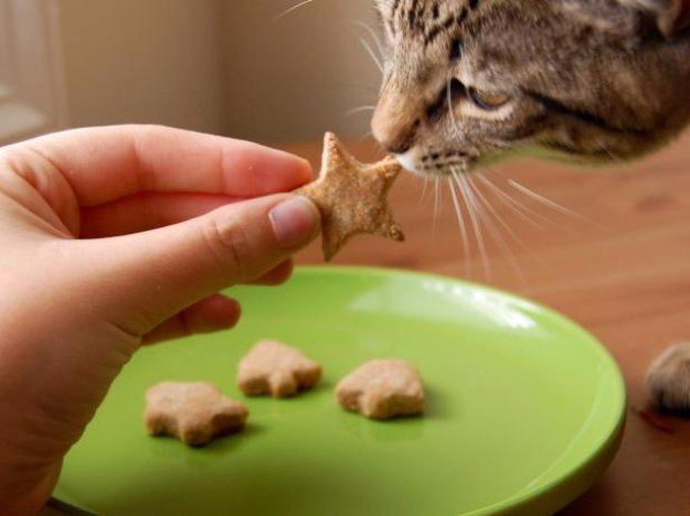 DIY Pet Recipes For Treats and Food - Pet-Approved Recipe for Cats - Dogs, Cats and Puppies Will Love These Homemade Products and Healthy Recipe Ideas - Peanut Butter, Gluten Free, Grain Free - How To Make Home made Dog and Cat Food