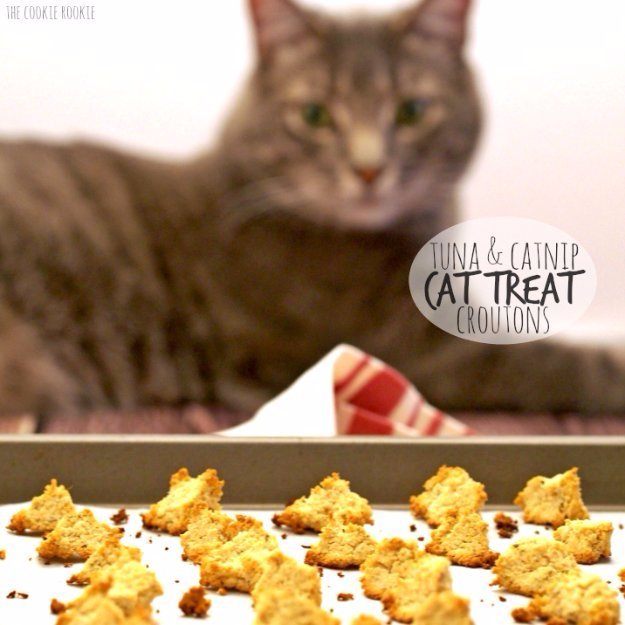 DIY Pet Recipes For Treats and Food - Tuna and Catnip Cat Treat Croutons - Dogs, Cats and Puppies Will Love These Homemade Products and Healthy Recipe Ideas - Peanut Butter, Gluten Free, Grain Free - How To Make Home made Dog and Cat Food