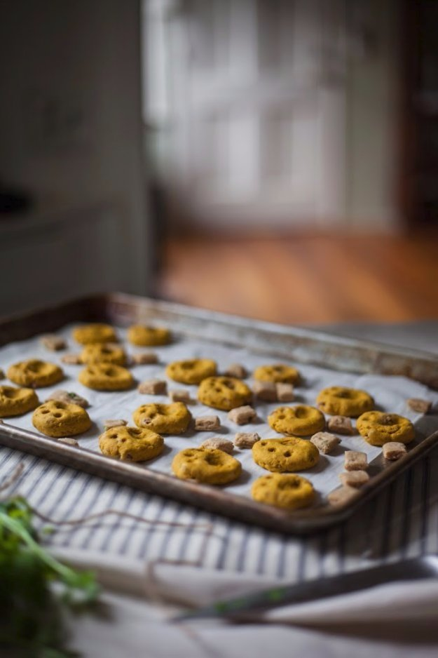 DIY Pet Recipes For Treats and Food - Tuna and Cheddar Cat Crisps - Dogs, Cats and Puppies Will Love These Homemade Products and Healthy Recipe Ideas - Peanut Butter, Gluten Free, Grain Free - How To Make Home made Dog and Cat Food