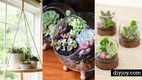 32 Super Creative DIY Succulent Crafts and DIYs for You to Try | DIY Joy Projects and Crafts Ideas