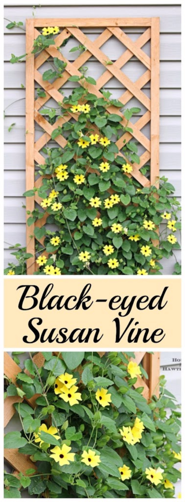 Creative Ways to Increase Curb Appeal on A Budget - Back Eyed Susan Vines - Cheap and Easy Ideas for Upgrading Your Front Porch, Landscaping, Driveways, Garage Doors, Brick and Home Exteriors. Add Window Boxes, House Numbers