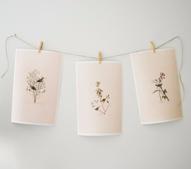 DIY Renters Decor Ideas - Botanical Print and Clothespin Gallery Wall - Cool DIY Projects for Those Renting Aparments, Condos or Dorm Rooms - Easy Temporary Wall Art, Contact Paper, Washi Tape and Shelves to Make at Home  #diyhomedecor #diyideas