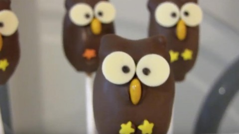 Darling Owl Cake Pop Balls You Can Learn How to Make! | DIY Joy Projects and Crafts Ideas