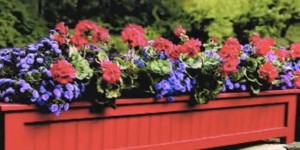 Charming Flower Outdoor Planter Box Brightens Up Any Yard!