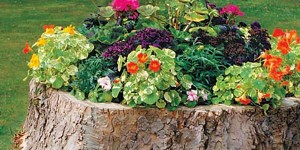 Charming Tree Stump Flower Box….So Clever and Exquisitely Beautiful!