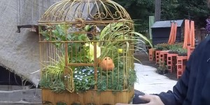 Regular Hanging Baskets Were Blah & I Decided to Put My Plants in a Bird Cage!