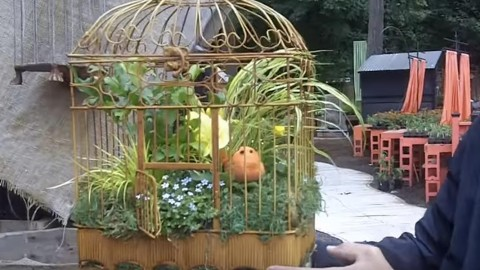 Regular Hanging Baskets Were Blah & I Decided to Put My Plants in a Bird Cage! | DIY Joy Projects and Crafts Ideas