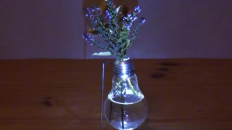 Youve Got To See How This Amazing Light Bulb Vase Works