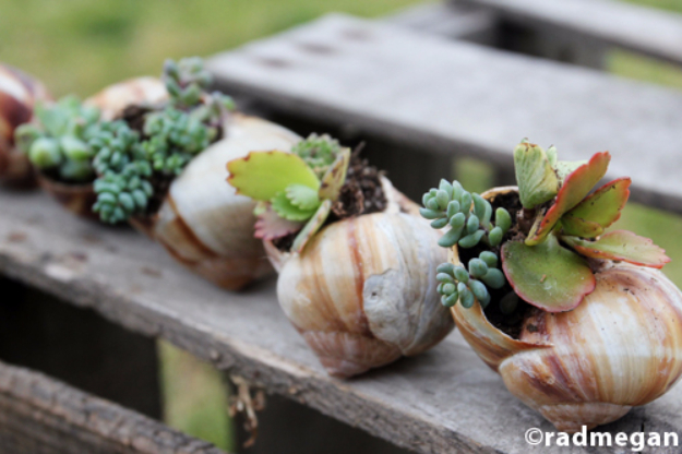 Creative DIY Planters - Shell Potted Succulents - Best Do It Yourself Planters and Crafts You Can Make For Your Plants - Indoor and Outdoor Gardening Ideas - Cool Modern and Rustic Home and Room Decor for Planting With Step by Step Tutorials #gardening #diyplanters #diyhomedecor