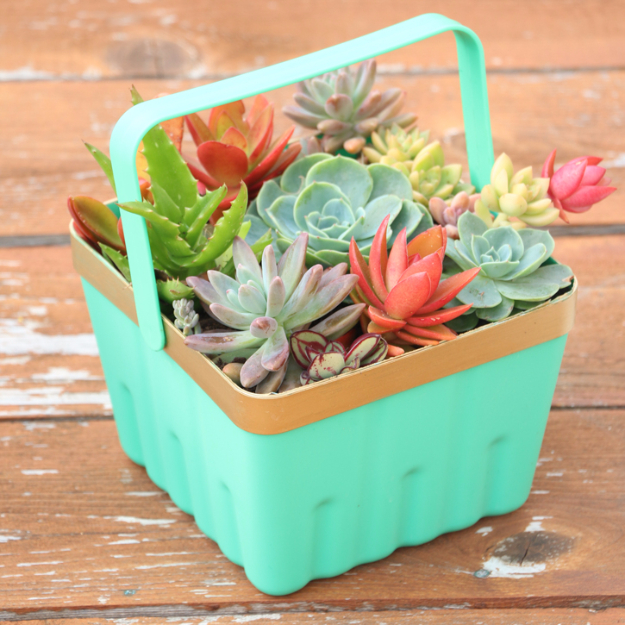 Creative DIY Planters - Simple Berry Basket Succulent Planter - Best Do It Yourself Planters and Crafts You Can Make For Your Plants - Indoor and Outdoor Gardening Ideas - Cool Modern and Rustic Home and Room Decor for Planting With Step by Step Tutorials