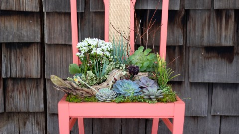 Repurpose Vintage Chairs Into Charming Succulent Planters! | DIY Joy Projects and Crafts Ideas