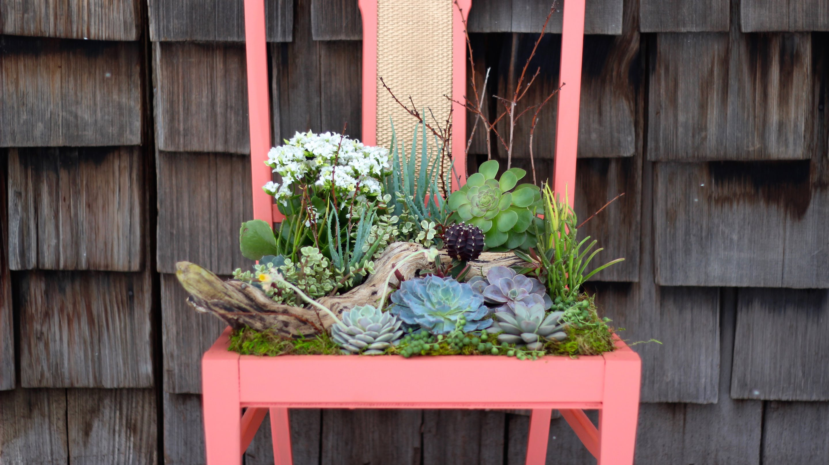 Repurpose Vintage Chairs Into Charming Succulent Planters