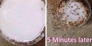 I Had a Hallelujah Breakdown When I Found a DIY Remedy That Really Kills Ants!