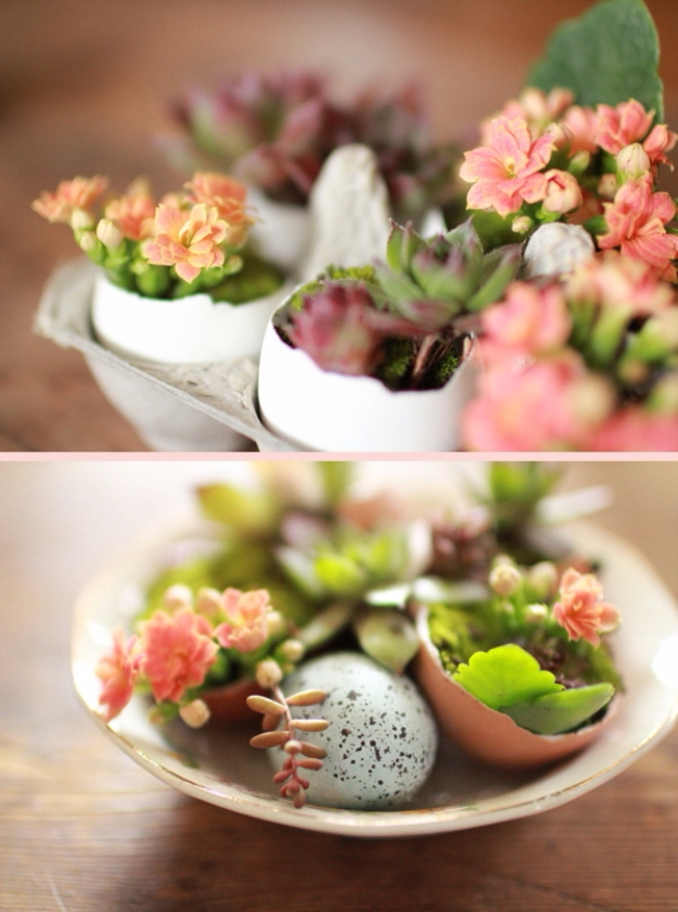 DIY Projects Made From Trash - Egg Carton And Shell Succulent Planters - Cool Crafts and DIY Made from Upcycled Items You Don't Want To Throw Away. Home Decor, Gifts and Fun Ideas for Kids, Adults and Teens