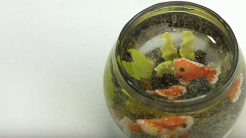 These Goldfish Have An Incredible Secret, Watch To Find Out What It Is… | DIY Joy Projects and Crafts Ideas