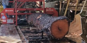 You Won't Believe How He Transforms This Tree Into Something Spectacular!