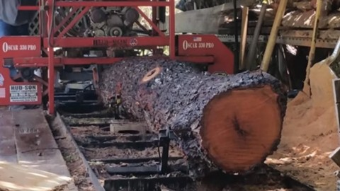 You Won't Believe How He Transforms This Tree Into Something Spectacular! | DIY Joy Projects and Crafts Ideas