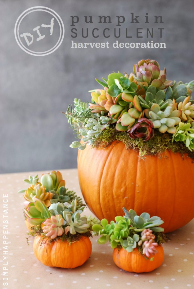 34 pumpkin decorations for fall pumpkin succulent harvest decoration easy diy pumpkin decor ideas - Pumpkin Decor