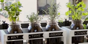 You Can Plant Fresh Herbs In Minutes With This Mason Jar Herb Garden!