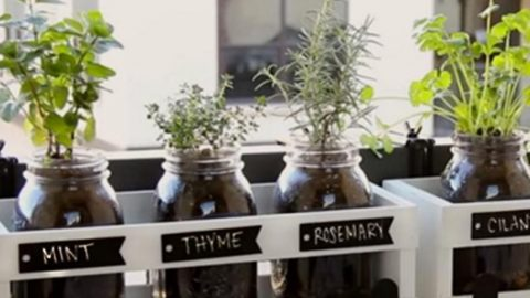 You Can Plant Fresh Herbs In Minutes With This Mason Jar Herb Garden!   DIY Joy Projects and Crafts Ideas