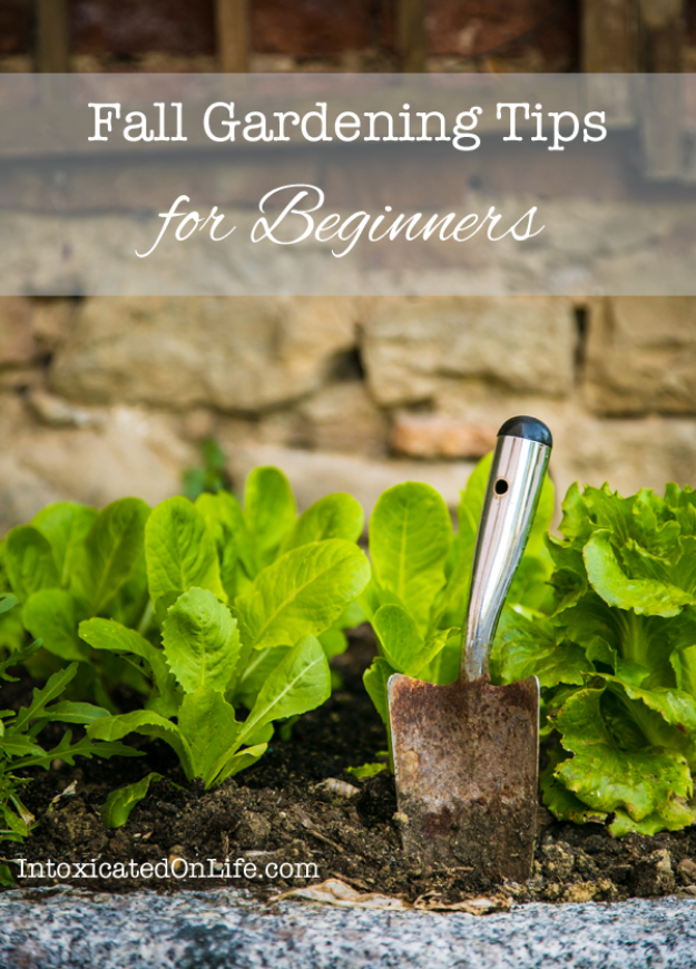 Best Gardening Ideas for Fall - Fall Gardening Tips For Beginners - Cool DIY Garden Ideas for Planting Autumn Varieties of Flowers and Vegetables - Pumpkins, Container Gardens, Planting Tips, Herbs and Easy Ideas for Beginners http://diyjoy.com/gardening-ideas-fall