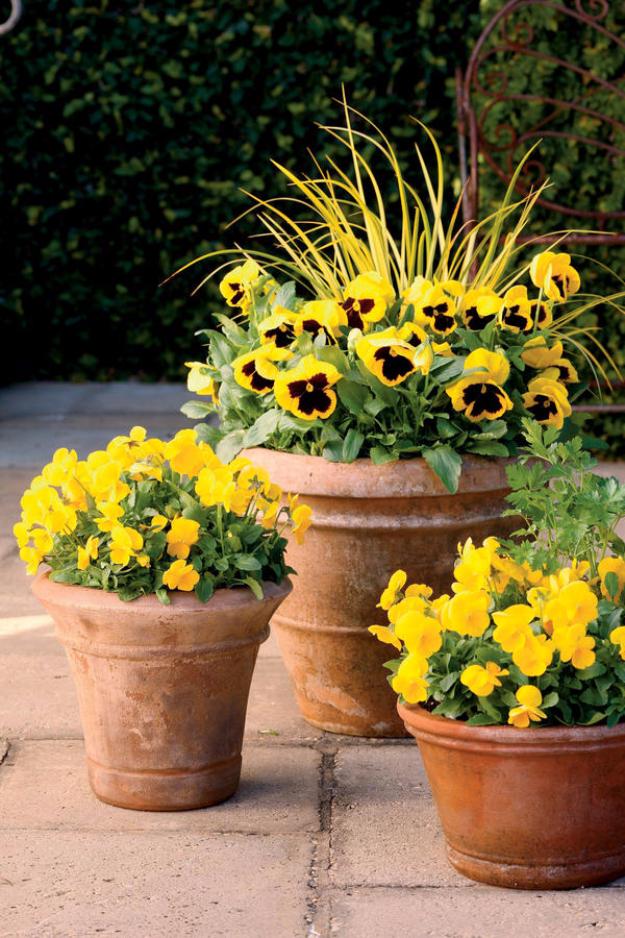 33 DIY Gardening Ideas for Fall on Tree Planting Ideas For Backyard id=68349