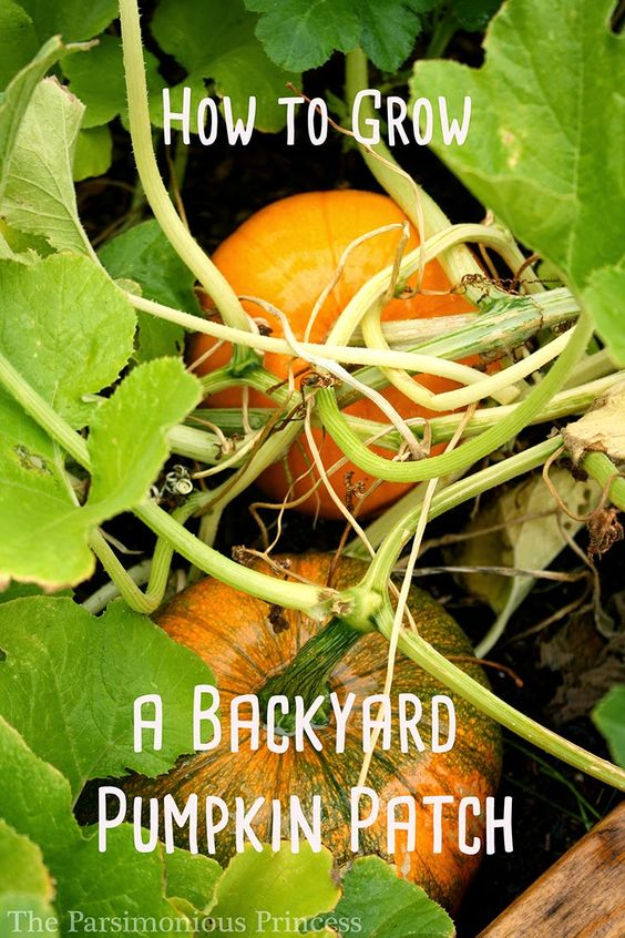 Best Gardening Ideas for Fall - Grow A Backyard Pumpkin Patch - Cool DIY Garden Ideas for Planting Autumn Varieties of Flowers and Vegetables - Pumpkins, Container Gardens, Planting Tips, Herbs and Easy Ideas for Beginners http://diyjoy.com/gardening-ideas-fall